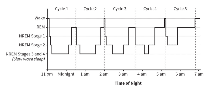 The Sleep Cycle Calculator: How Much Sleep Do You Need? 3
